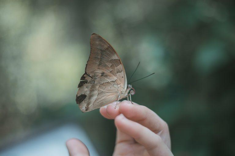 butterfly puerto maldonado