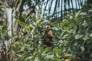 wildlife travel photographer