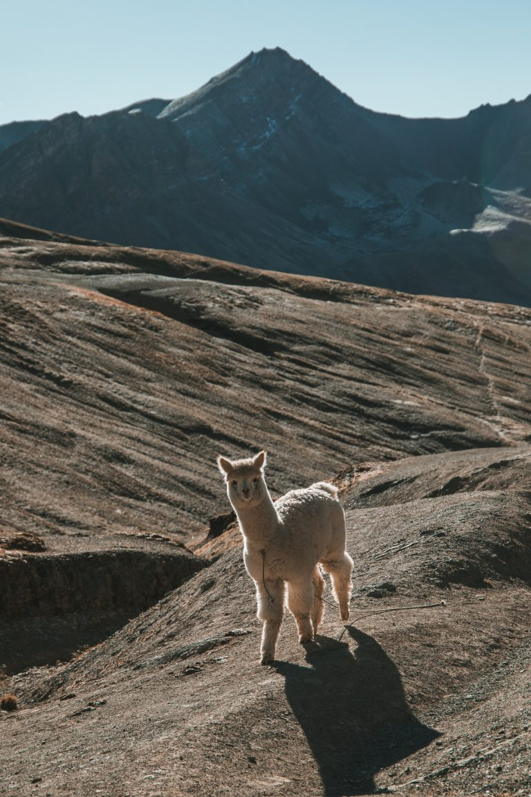 rainbow mountain llama travel