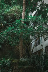 el mapi aguas calientes hotel inkaterra